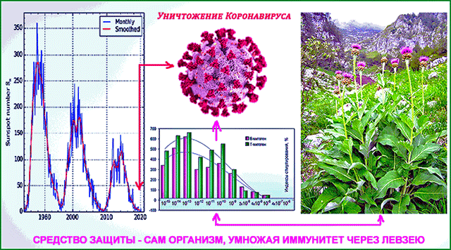 Модель уничтожения коронавируса SARS-CoV-2, вызвавшего болезнь Covid-19 (рис.в центре сверху); мутировавшего от галактической радиации (рис. слева) – через умножение иммунитета от левзеи (внизу и справа)