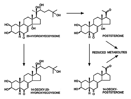 Экдистерон 20-hydroxyecdysone и его аналоги