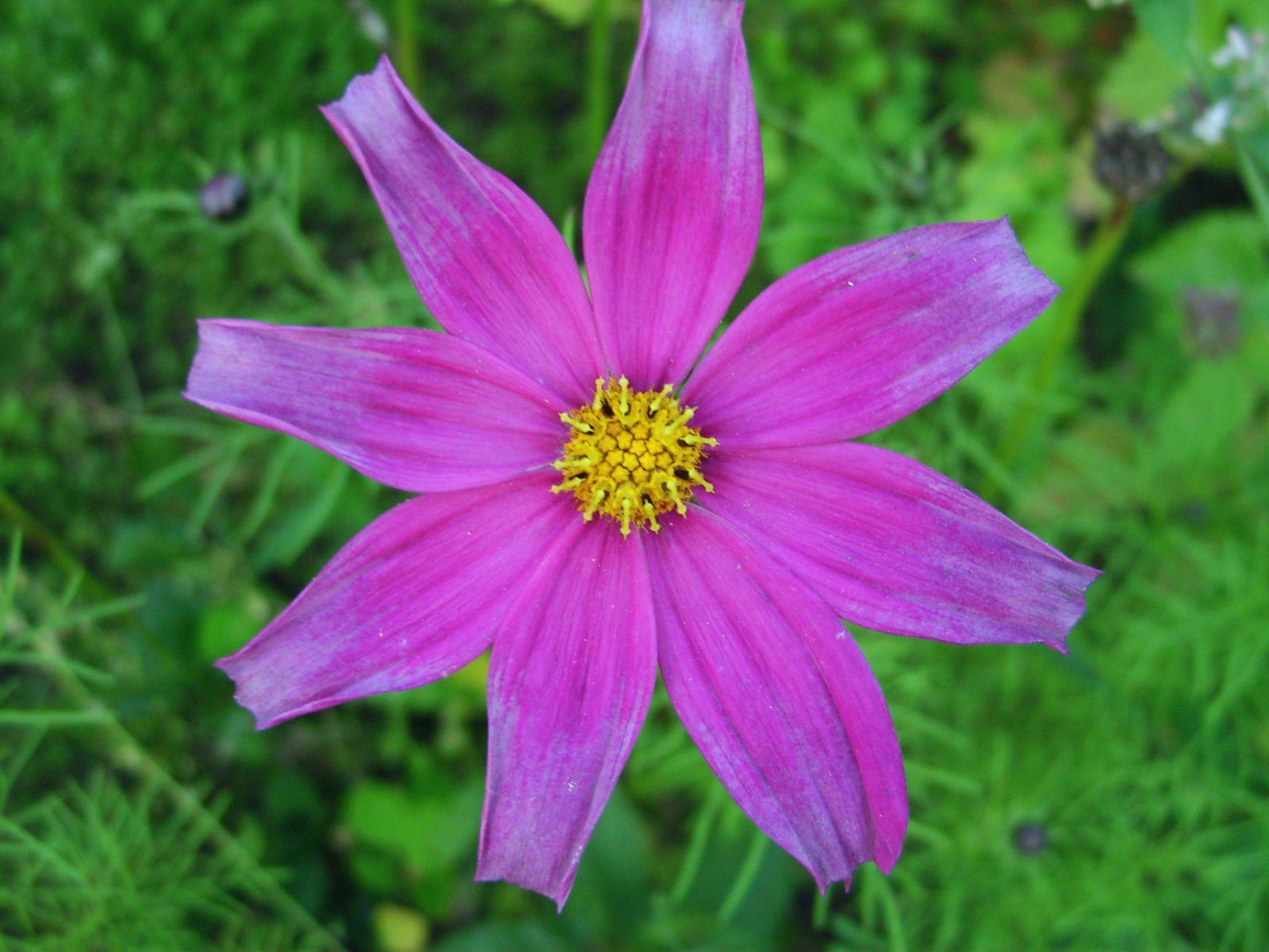 Просто цветок