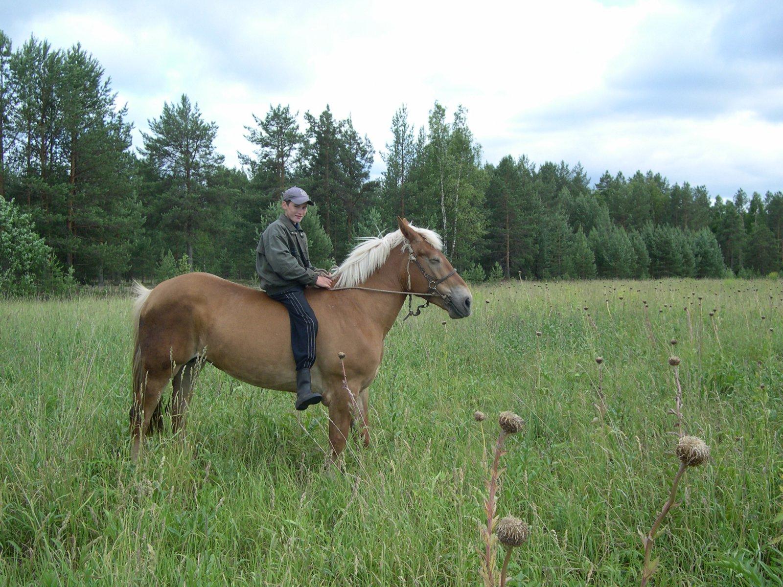 Юный ковбой на фоне левзеи