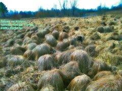 Лешие на болоте - только головы торчат