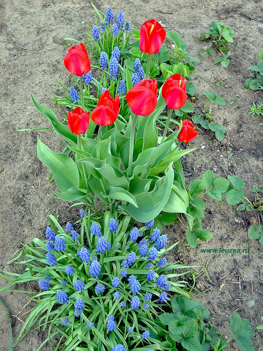 Креатив цветы