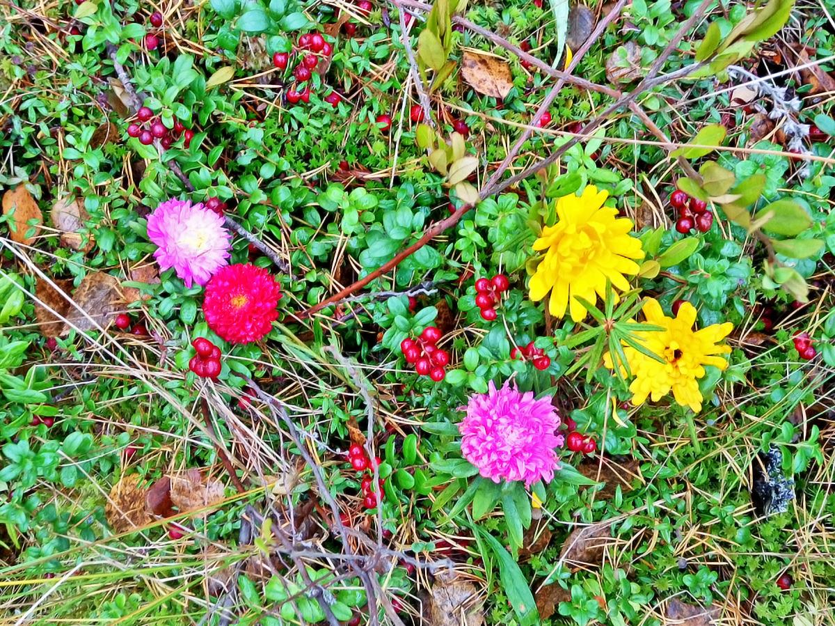 Брусника с цветами