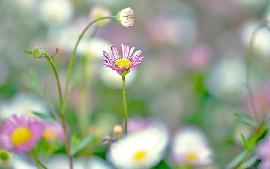 Цветы светлые