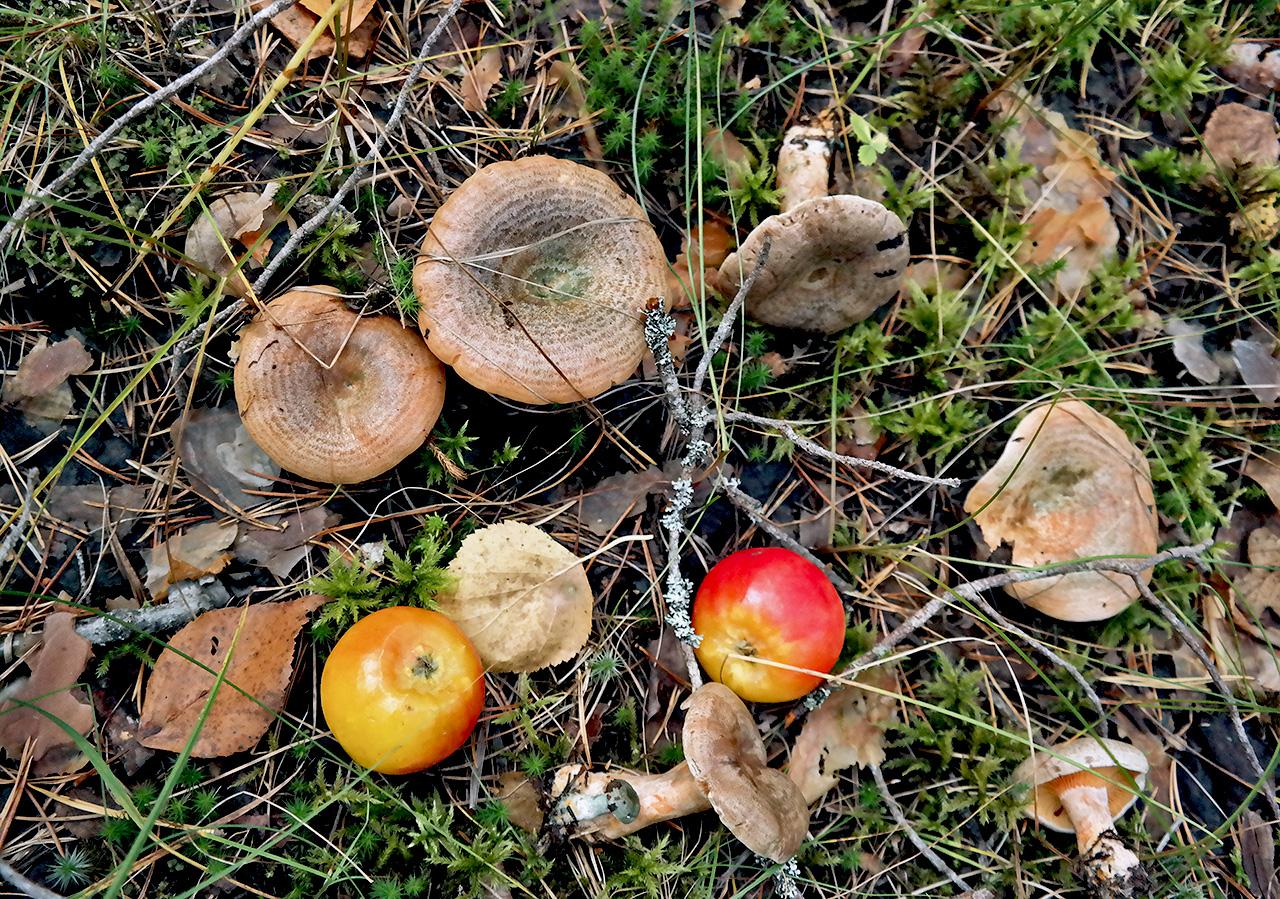 Рыжики с яблоками