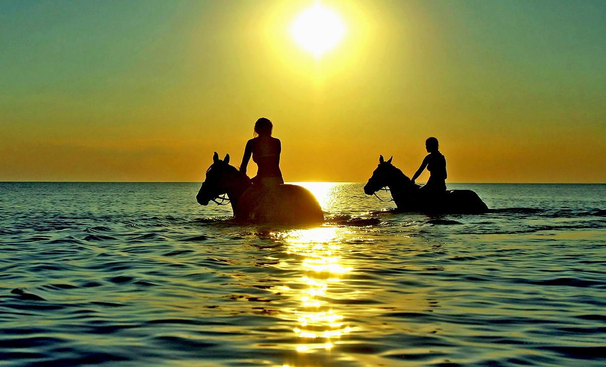 Купание лошадей