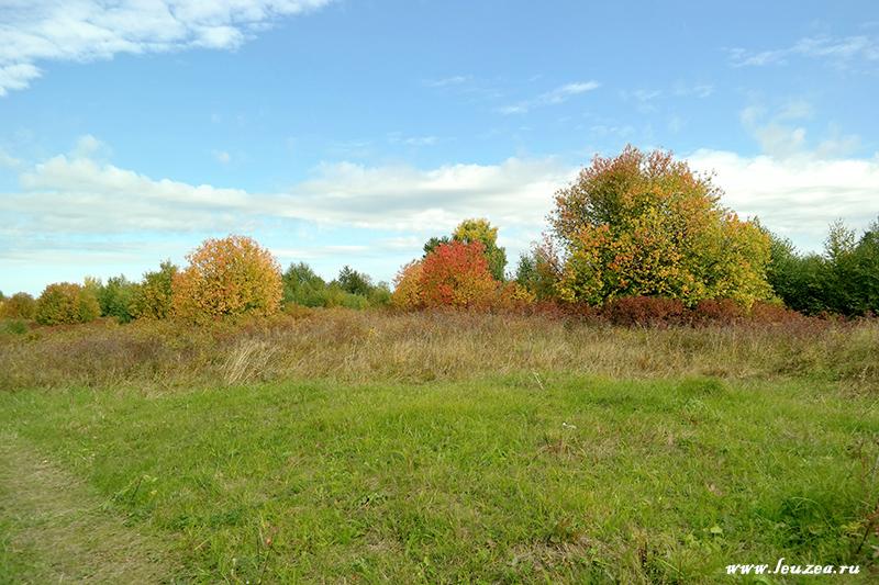 Осень с черемухой