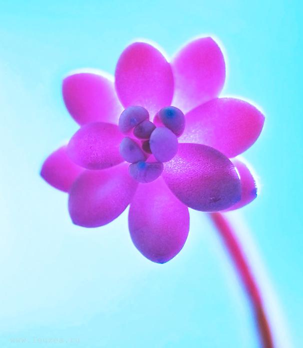 Необычный цветок