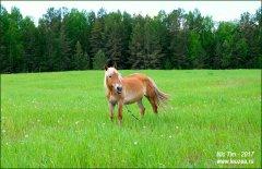 Здравствуй лошадка