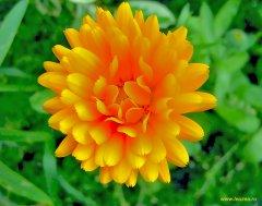 Соцветия теплые
