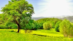 Зеленый лесок