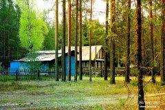 Домик лесного мэра