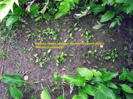 Семена-весенний посев.jpg