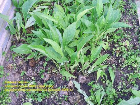 Семена-осенний посев-1.jpg