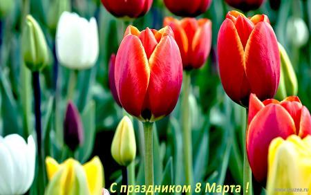 Цветы-тюльпаны-09-site.jpg