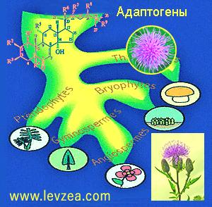 1-Растения-Источники-экдистерона-6-2.png