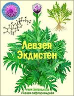 4-Соцветие-левзеи-1-2-4.png
