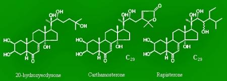 ecdysterone-ecdystenum-1.jpg