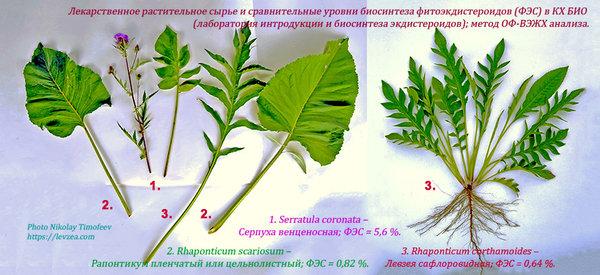 Три главных экдистерон синтезирующие растения