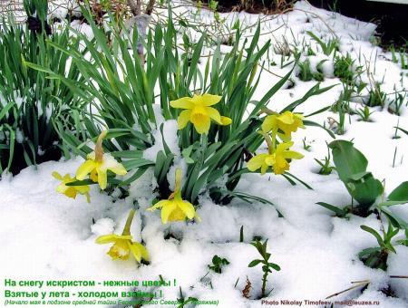 06_svety_sneg.JPG
