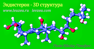 Экдистерон 3D структура